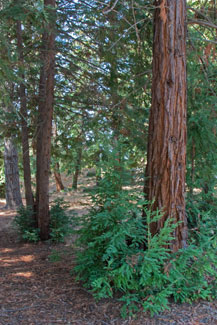 Chapel Redwood Grove